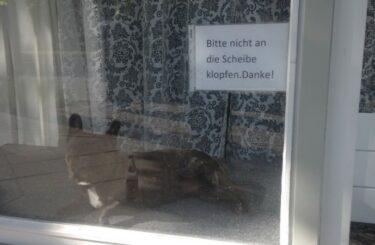 Hund Katze im Schaufenster