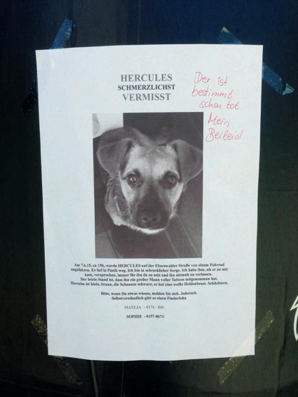 Hund angefahren Berlin