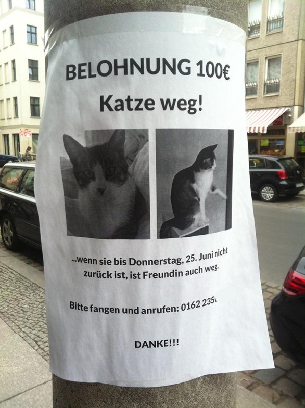 Katze weg Freundin Berlin