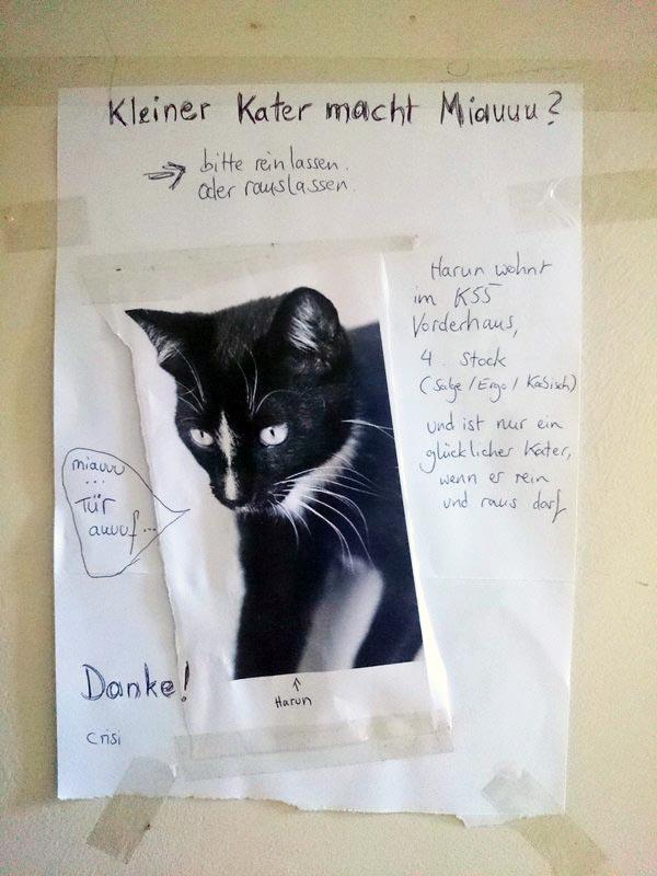 Kleine Kater Katze Berlin