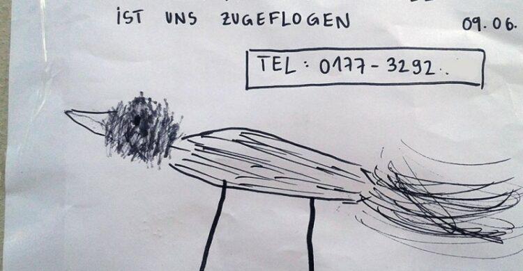 Vogel entflogen Berlin