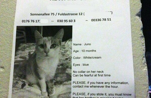 Katze verloren in Berlin