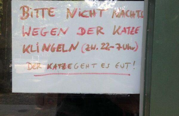 Katze in der Stadt Berlin Katzenfenster