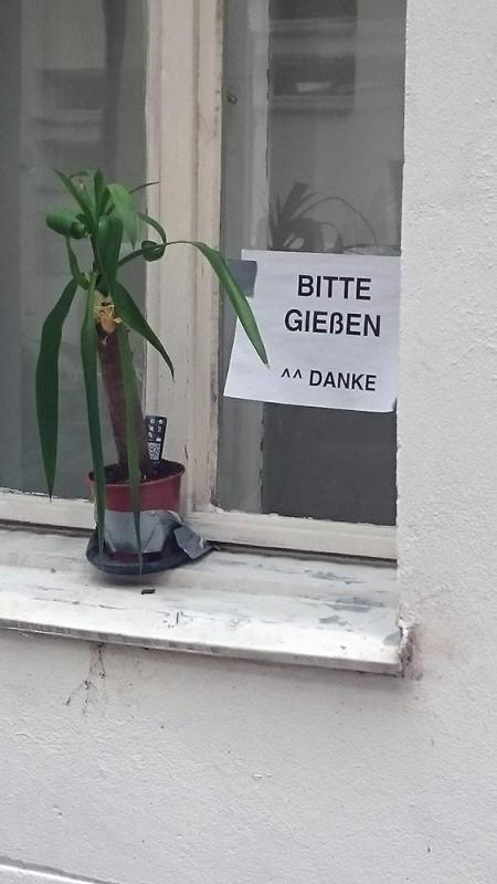 Pflanzen gießen Urlaub Berlin