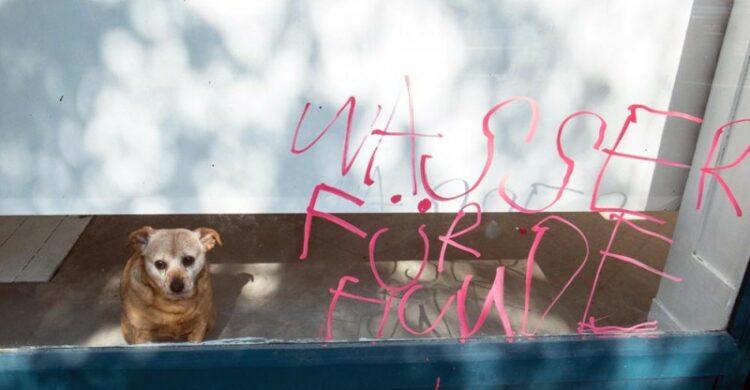 Wasser trinken Hunde Berlin Sommer