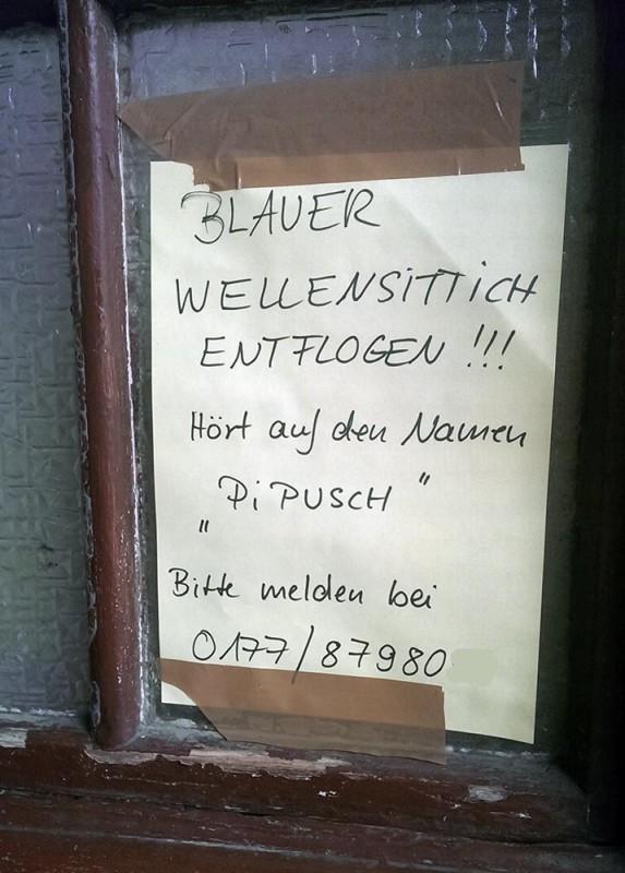 Wellensittich entflogen Notes of Berlin
