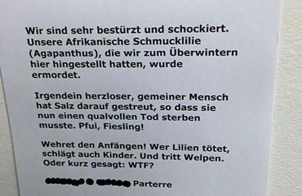 Afrikanische Schmucklilie_Pflanzen kaufen in Berlin
