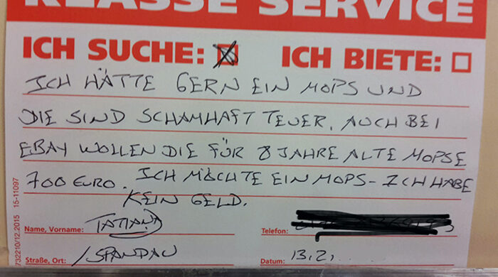 Mops Hunde Berlin