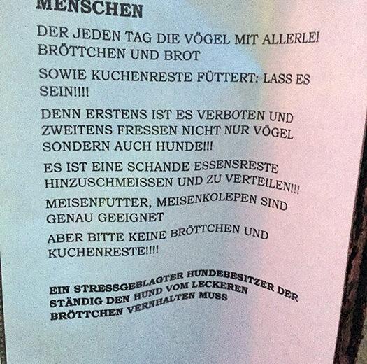 Vögel Enten füttern in Berlin
