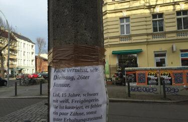 katze entlaufen berlin was tun?