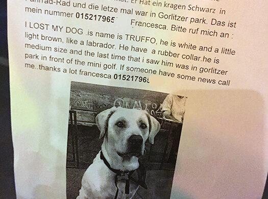Hund verloren in Berlin