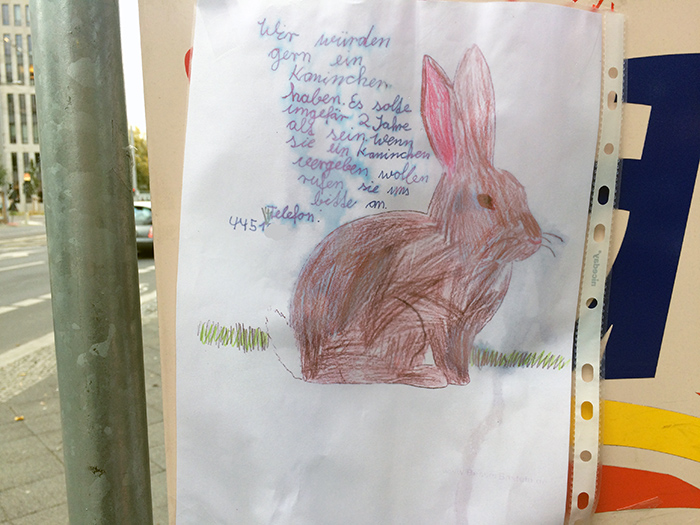 kaninchen-kaufen