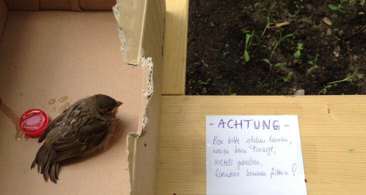 vogelrettung-berlin