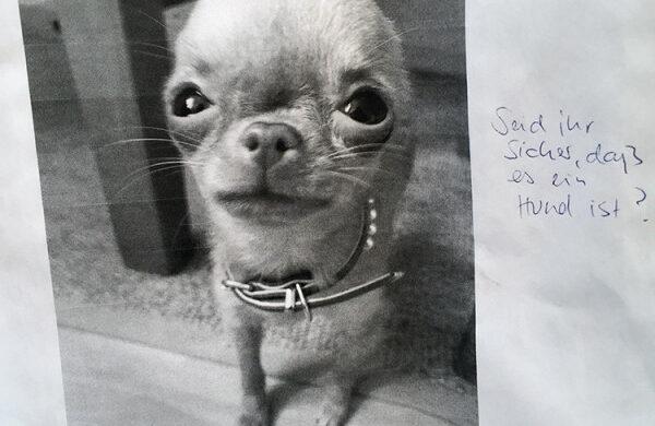 Hund gefunden Berlin