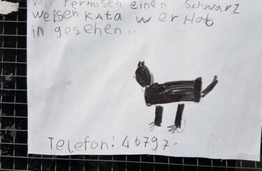 Katze Kater gesucht Berlin