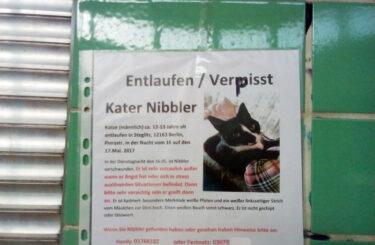 Katze vermisst Berlin