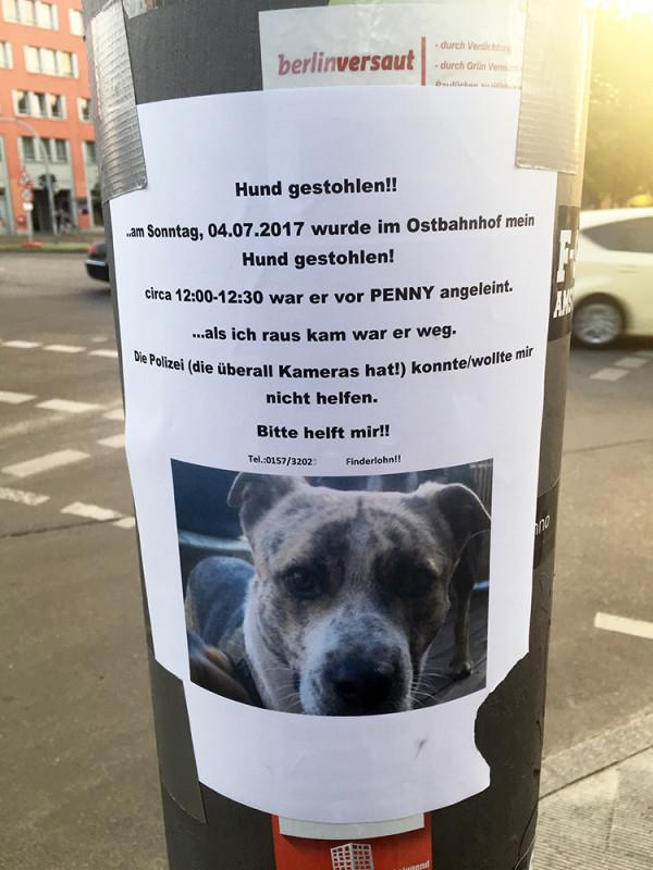 Hund gestohlen Berlin