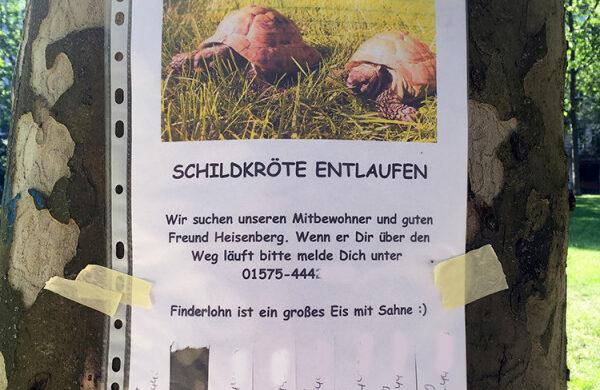 Schildkröte Berlin