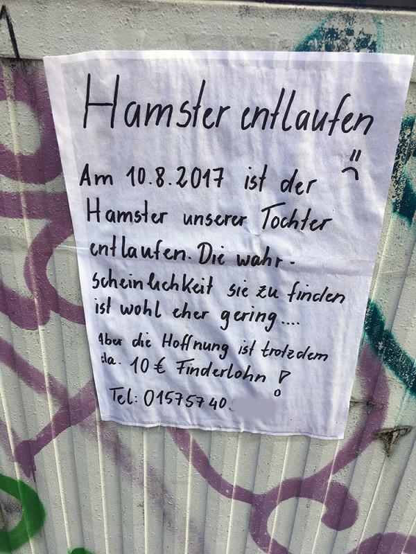 hamster entlaufen