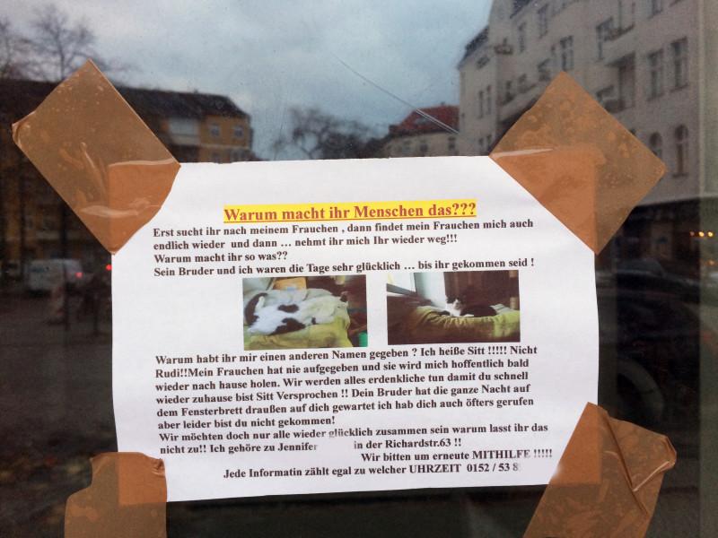 Katze verschwunden Berlin