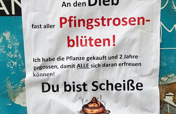 Pfingstrose Berlin