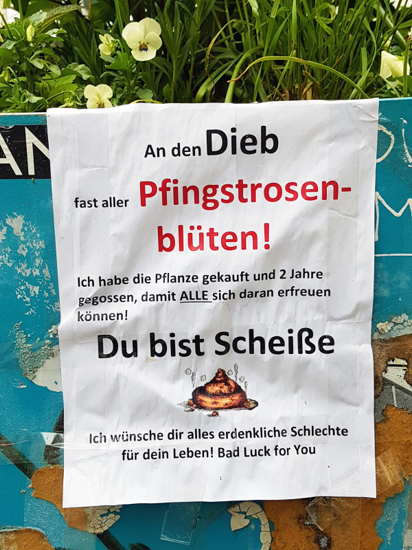 Pfingstrose Berlin