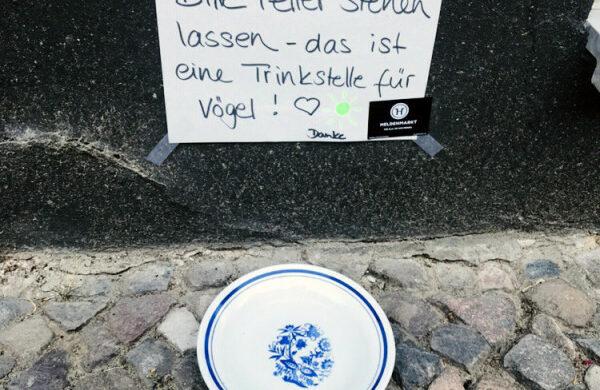 Hitze Berlin Vögel