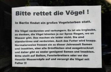 Vogel sterben Berlin