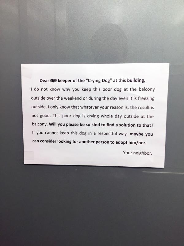 Hund auf Balkon