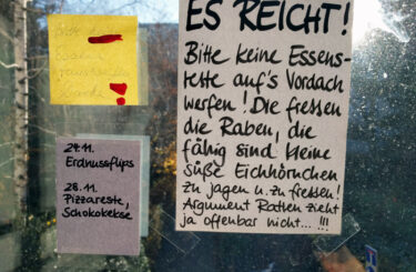 ratten in berlin