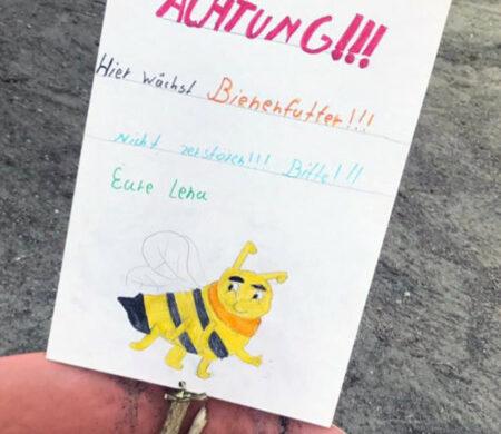 Bienen in Berlin