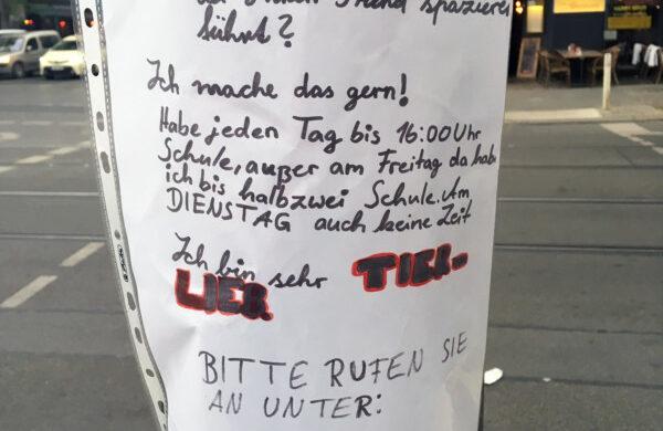 Hunde Sitter Berlin