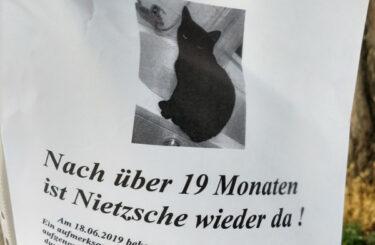 Katze gefunden Berlin