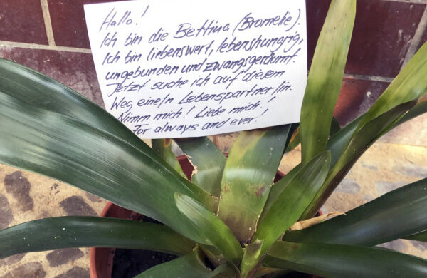 Pflanze zu verschenken Berlin