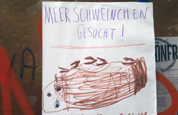 Meerschweinchen Berlin