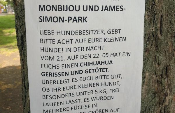 Füchse in Berlin
