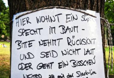 vogelrettung berlin
